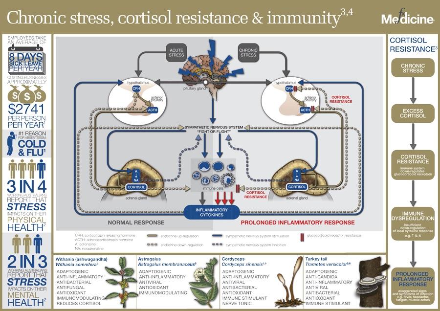 Chronic-stress-and-immunity.jpg