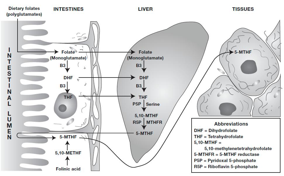 Folate, Folinic Acid & Methyltetrahydrofolate | FX Medicine