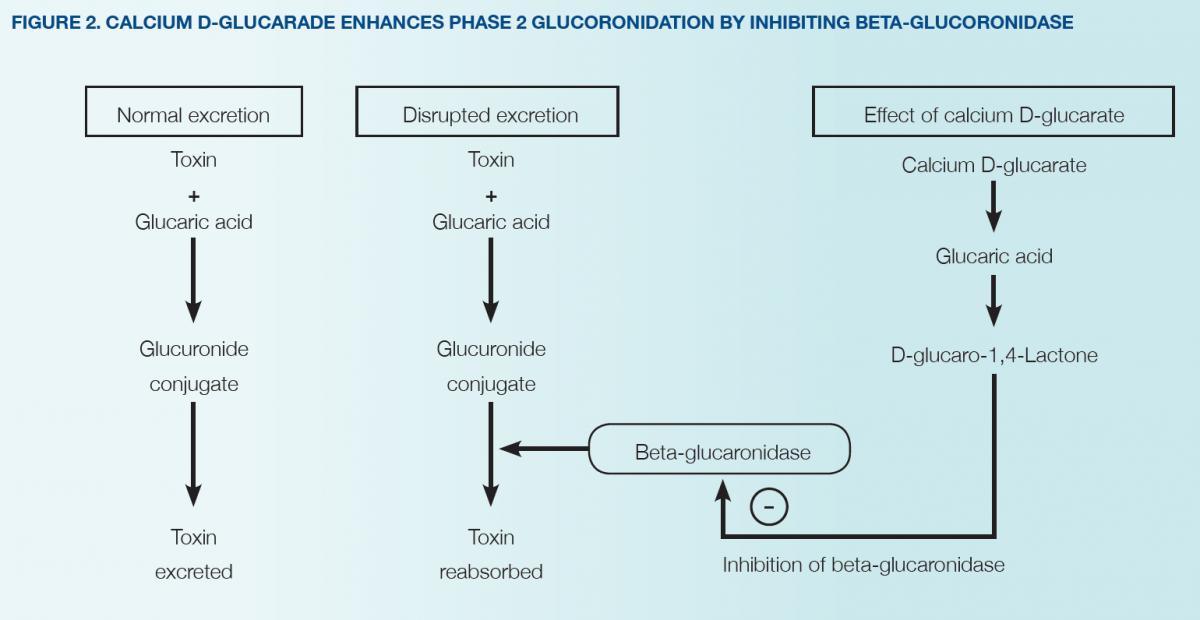 The Role Of Calcium D Glucarate In Detoxification Fx Medicine