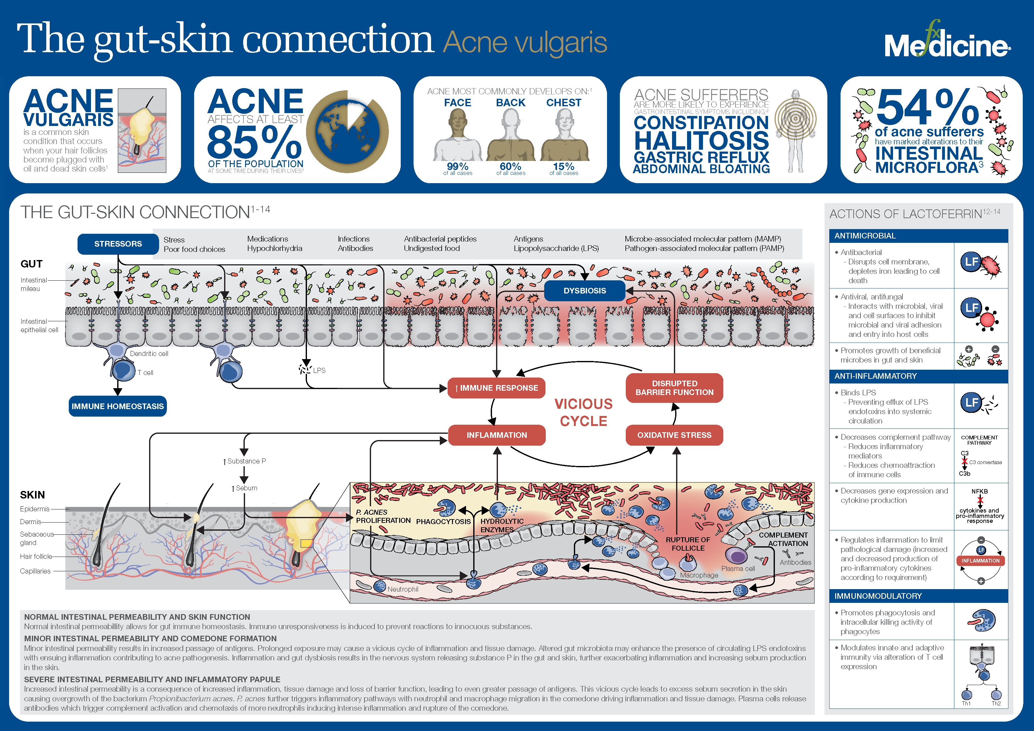 The Gut Skin Connection_INFOGRAPHIC.png