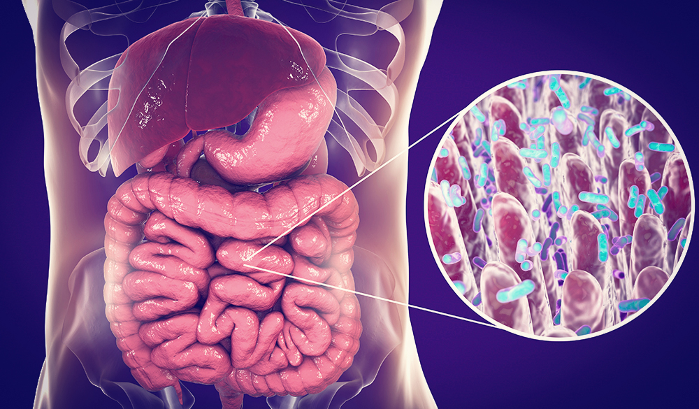 A balanced microbiome supports immune health