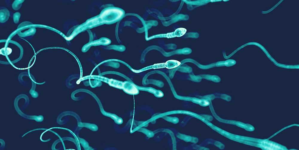 Male Fertility: Ubiquinol shows promise in sperm quality | FX Medicine