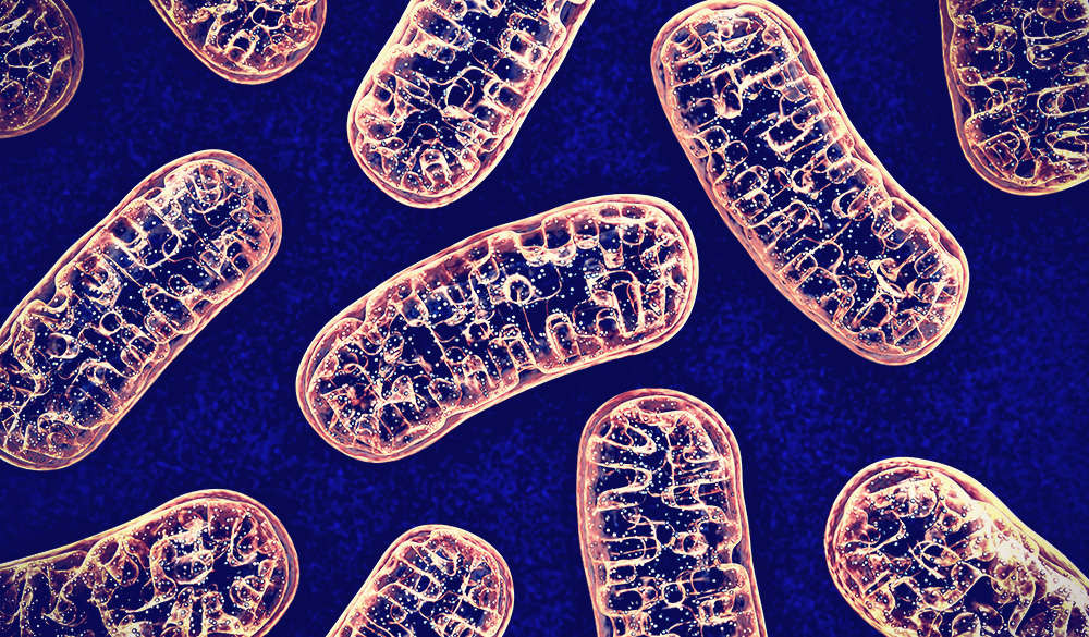 Mitochondrial dysfunction in autism spectrum disorders