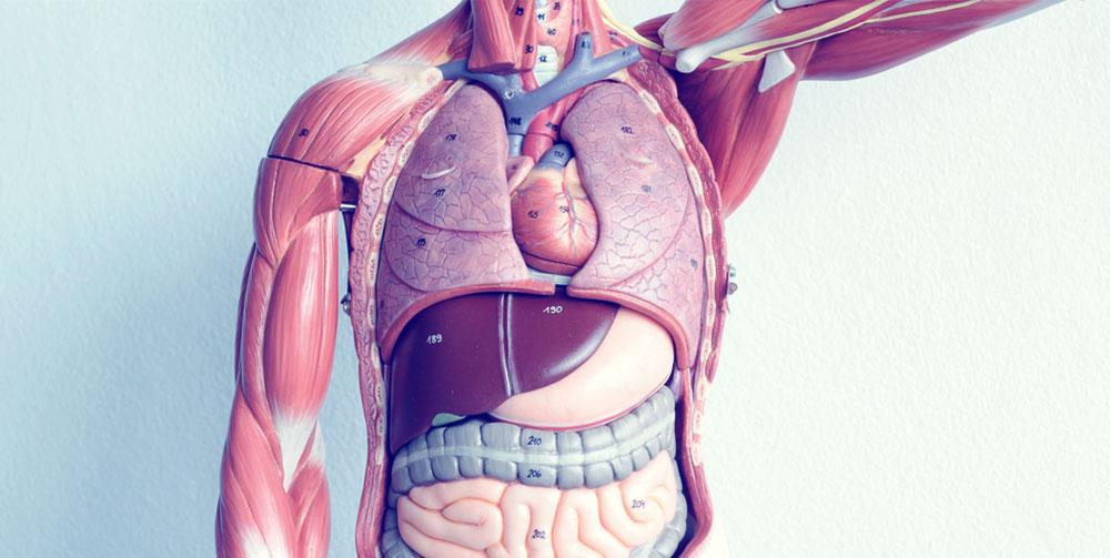 Organs Of Detoxification Fx Medicine