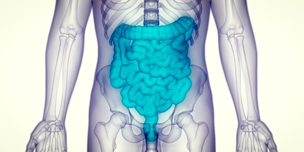 digestive system, intestines, leaky gut