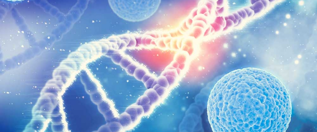 SAMe is involved in the methylation of phospholipids, DNA, RNA, proteins and neurotransmitters