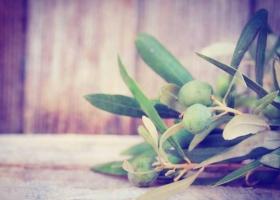 Herbal medicine olive leaf on wooden background