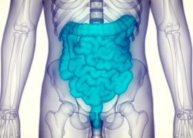 digestive system, intestines, leaky gut