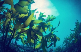 Promising results for seaweed as sunscreen alternative